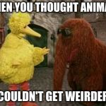 Big Bird And Snuffy Meme | WHEN YOU THOUGHT ANIMALS COULDN'T GET WEIRDER | image tagged in memes,big bird and snuffy | made w/ Imgflip meme maker