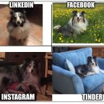 4 Square Grid | LINKEDIN                            FACEBOOK INSTAGRAM                                     TINDER | image tagged in 4 square grid | made w/ Imgflip meme maker