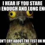 Weird Stuff I Do Potoo Meme | I HEAR IF YOU STARE HARD ENOUGH AND LONG ENOUGH YOU WON'T CRY ABOUT THE TEST ON MONDAY | image tagged in memes,weird stuff i do potoo | made w/ Imgflip meme maker