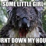 Angry Koala Meme | SOME LITTLE GIRL BURNT DOWN MY HOUSE | image tagged in memes,angry koala | made w/ Imgflip meme maker