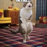 Gotta Go Cat Meme | OWWW RIGHT IN THE.... OH WAIT, THERE GONE | image tagged in memes,gotta go cat | made w/ Imgflip meme maker