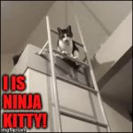 Ninja | I IS NINJA KITTY! | image tagged in gifs,ninja,cats | made w/ Imgflip video-to-gif maker