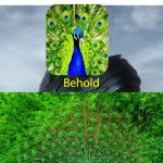 Behold my stuff | nobody: peacock: | image tagged in behold my stuff,peackock | made w/ Imgflip meme maker