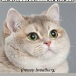 Heavy Breathing Cat Meme | EVERY ONE TRIES SO HARD TO GET 10 UPVOTES ME: UPLOADS AN IMAGE OF A FAT CAT | image tagged in memes,heavy breathing cat | made w/ Imgflip meme maker