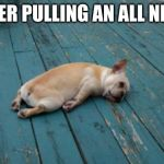 Oof | ME AFTER PULLING AN ALL NIGHTER. | image tagged in tired dog,stop reading the tags | made w/ Imgflip meme maker