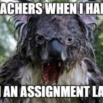 Angry Koala Meme | TEACHERS WHEN I HAND IN AN ASSIGNMENT LATE | image tagged in memes,angry koala | made w/ Imgflip meme maker