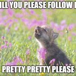 Please follow me | WILL YOU PLEASE FOLLOW ME PRETTY PRETTY PLEASE | image tagged in memes,baby insanity wolf,followers | made w/ Imgflip meme maker