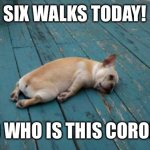 tired dog | SIX WALKS TODAY! AND WHO IS THIS CORONA? | image tagged in tired dog | made w/ Imgflip meme maker