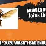 "Murder Hornets are Coronavirus' echo fighter. | MURDER HORNET ""AS IF 2020 WASN'T BAD ENOUGH."" 