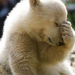 Facepalm Bear Meme | ME: RUNS INTO A WALL MY MOM: | image tagged in memes,facepalm bear | made w/ Imgflip meme maker