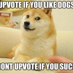 Doge 2 Meme | UPVOTE IF YOU LIKE DOGS DONT UPVOTE IF YOU SUCK | image tagged in memes,doge 2 | made w/ Imgflip meme maker