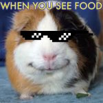 Guinea Pig | WHEN YOU SEE FOOD | image tagged in guinea pig | made w/ Imgflip meme maker