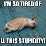 tired dog | I'M SO TIRED OF ALL THIS STUPIDITY!!! | image tagged in tired dog | made w/ Imgflip meme maker