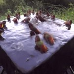 This is what a hummingbird pool party looks like. | image tagged in gifs,humming bird,pool party | made w/ Imgflip video-to-gif maker