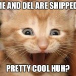 Yep it happened | ME AND DEL ARE SHIPPED! PRETTY COOL HUH? | image tagged in memes,excited cat | made w/ Imgflip meme maker