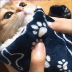 Purrito | I IS A PURRITO | image tagged in gifs,cats,kittens,cute,brat,awww | made w/ Imgflip video-to-gif maker