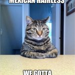 Take A Seat Cat Meme | SO YOUR A MEXICAN HAIRLESS WE GOTTA CLEANING POSITION OPEN | image tagged in memes,take a seat cat | made w/ Imgflip meme maker