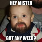 Beard Baby Meme | HEY MISTER GOT ANY WEED? | image tagged in memes,beard baby | made w/ Imgflip meme maker