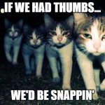 Kitty Gang | IF WE HAD THUMBS... WE'D BE SNAPPIN' | image tagged in memes,wrong neighboorhood cats | made w/ Imgflip meme maker