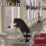 Balcony Bear | What's in a _____? That which we call a ______ By any other name would smell as ________. | image tagged in balcony bear | made w/ Imgflip meme maker