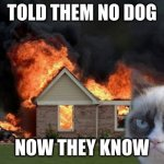 Grumpy Cat Fire | TOLD THEM NO DOG NOW THEY KNOW | image tagged in memes,burn kitty,grumpy cat | made w/ Imgflip meme maker