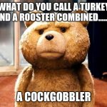 TED | WHAT DO YOU CALL A TURKEY AND A ROOSTER COMBINED.....? A COCKGOBBLER | image tagged in memes,ted | made w/ Imgflip meme maker