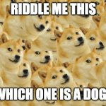 WhIch oNe DogE?????? | RIDDLE ME THIS WHICH ONE IS A DOGE | image tagged in memes,multi doge,doge,riddle me this | made w/ Imgflip meme maker