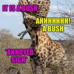 Funny Giraffe | AHHHHHHH! A LION IT IS A BUSH AHHHHHHH! A BUSH *ANNOYED SIGH* | image tagged in funny giraffe | made w/ Imgflip meme maker