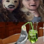 The lady and dog face swap | image tagged in unsee juice,memes,funny,dog,face swap,cursed image | made w/ Imgflip meme maker