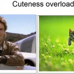 Cuteness overload | Cuteness overload | image tagged in memes,blank comic panel 2x1,kitten,mcgyver,cute | made w/ Imgflip meme maker