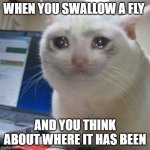 (put sad music here) | WHEN YOU SWALLOW A FLY AND YOU THINK ABOUT WHERE IT HAS BEEN | image tagged in crying cat,sad,fly,success kid,superbowl,funny | made w/ Imgflip meme maker
