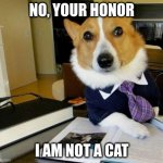 Lawyer Corgi Dog | NO, YOUR HONOR I AM NOT A CAT | image tagged in lawyer corgi dog | made w/ Imgflip meme maker