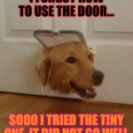 Dogs Man | I FORGOT HOW TO USE THE DOOR... SOOO I TRIED THE TINY ONE. IT DID NOT GO WELL | image tagged in hey check it | made w/ Imgflip meme maker