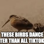 American Woodcock > TikToker | THESE BIRDS DANCE BETTER THAN ALL TIKTOKERS | image tagged in gifs,birds,tiktok sucks | made w/ Imgflip video-to-gif maker