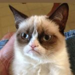grumpy cat | COME BUY THE SPECTACULAR GRUMPY CAT! *BATTERIES NOT INCLUDED* | image tagged in memes,grumpy cat | made w/ Imgflip meme maker