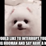 Henlo | I WOULD LIKE TO INTERRUPT YOUR SCROLLING HOOMAN AND SAY HAVE A NICE DAY | image tagged in gifs,pomeranian,pupper,doggo,stop reading these tags hooman and look at me | made w/ Imgflip video-to-gif maker