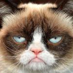 Grumpy Cat Not Amused meme