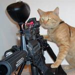 cat with gun meme