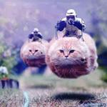 Storm Trooper Cats meme