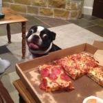 Hungry Pizza Dog meme
