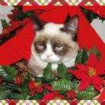 Grumpy Cat Mistletoe Meme Template