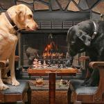 Dogs Playing Chess meme
