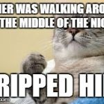 Success Cat | OWNER WAS WALKING AROUND IN THE MIDDLE OF THE NIGHT TRIPPED HIM | image tagged in success cat,AdviceAnimals | made w/ Imgflip meme maker
