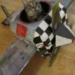 airplane cat meme