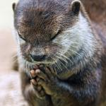 Thank you Lord Otter meme
