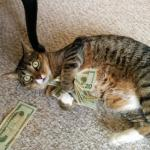 money cat meme