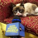grumpy cat news meme