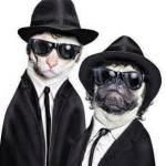 Blues Brothers Animals meme