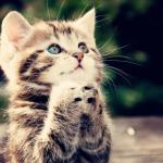 Cute Cat Praying meme