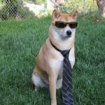 Business doge meme